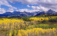 Aspen Groves are declining in the Rocky Mountains